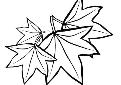 Разукрашка Опавшие листья клена распечатать на А4 - Листья