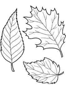 Бесплатная раскраска Осенние листочки распечатать на А4 и скачать - Листья
