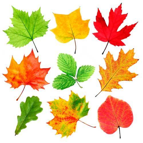 Как раскрасить листья деревьев