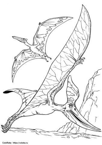 Пара птеродактилей бесплатная раскраска - Динозавры