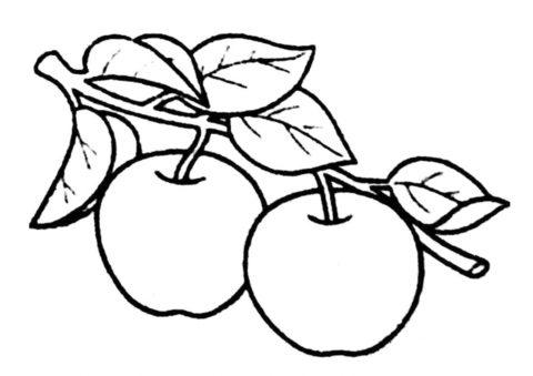 Яблоко бесплатная разукрашка - Пара яблок на ветке