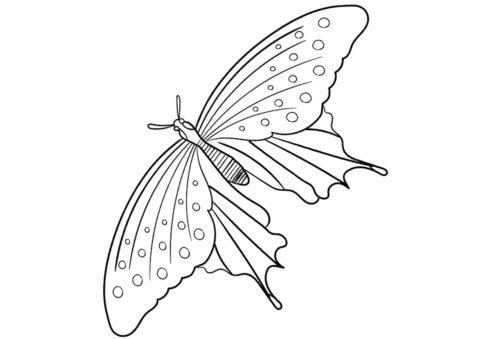 Парусник кресфонтес (Бабочки) распечатать раскраску