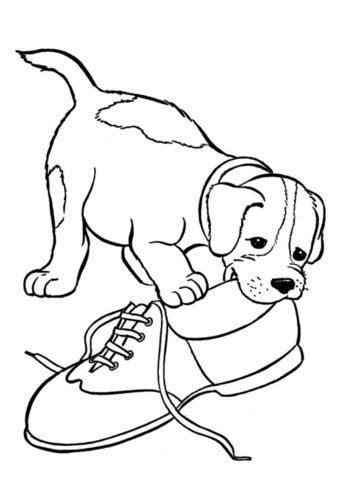Пёс-проказник грызёт ботинок хозяина - Собаки и щенки бесплатная раскраска