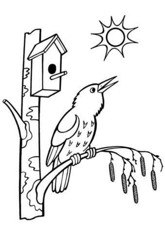 Раскраска Поющая птичка распечатать и скачать - Весна