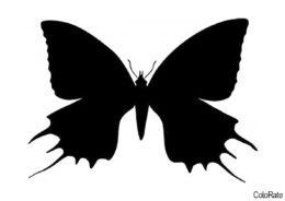 Прекрасный махаон шаблон распечатать бесплатно на А4 - Трафареты бабочек