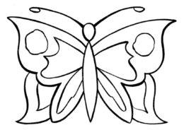 Прелестное насекомое разукрашка скачать и распечатать - Бабочки