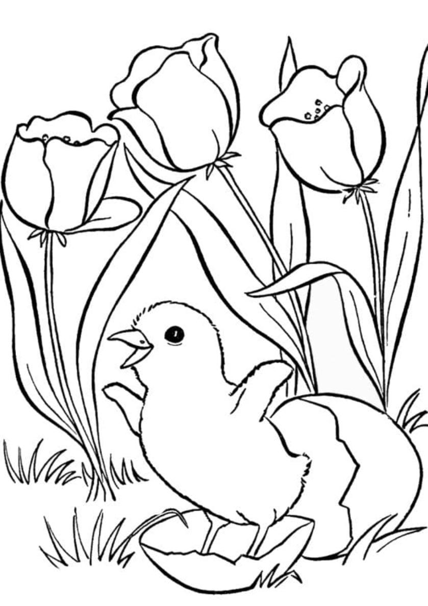 Раскраска Птенчик вылупился распечатать | Весна