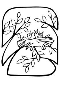 Птенцы раскраска распечатать бесплатно на А4 - Весна