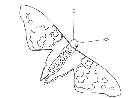 Бабочки бесплатная раскраска распечатать на А4 - Репейница