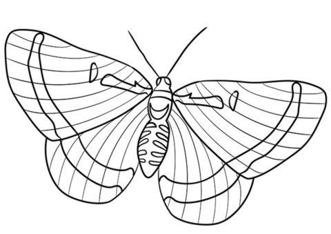 Бесплатная раскраска Риодинида - Бабочки