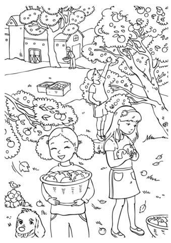 Раскраска Сбор яблок в саду распечатать | Осень