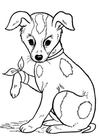 Щенок ударился лапкой (Собаки и щенки) бесплатная раскраска на печать