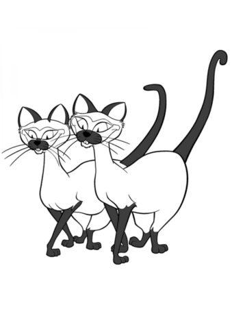 Коты, кошки, котята распечатать раскраску на А4 - Сиамские близнецы