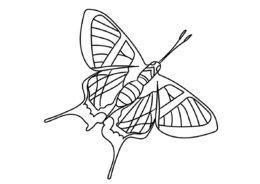 Сильфина ангел распечатать разукрашку бесплатно - Бабочки