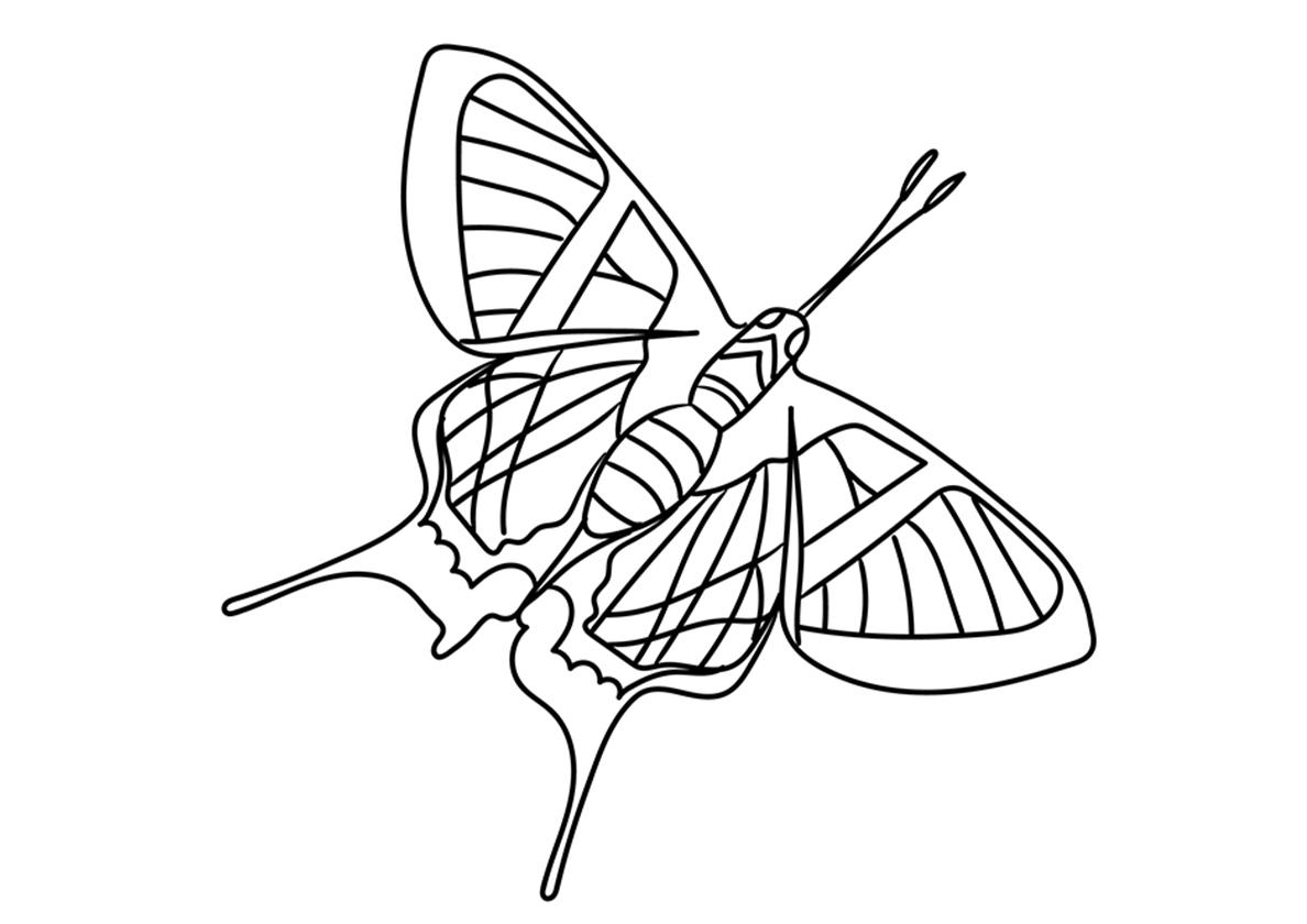 Раскраска Сильфина ангел распечатать | Бабочки