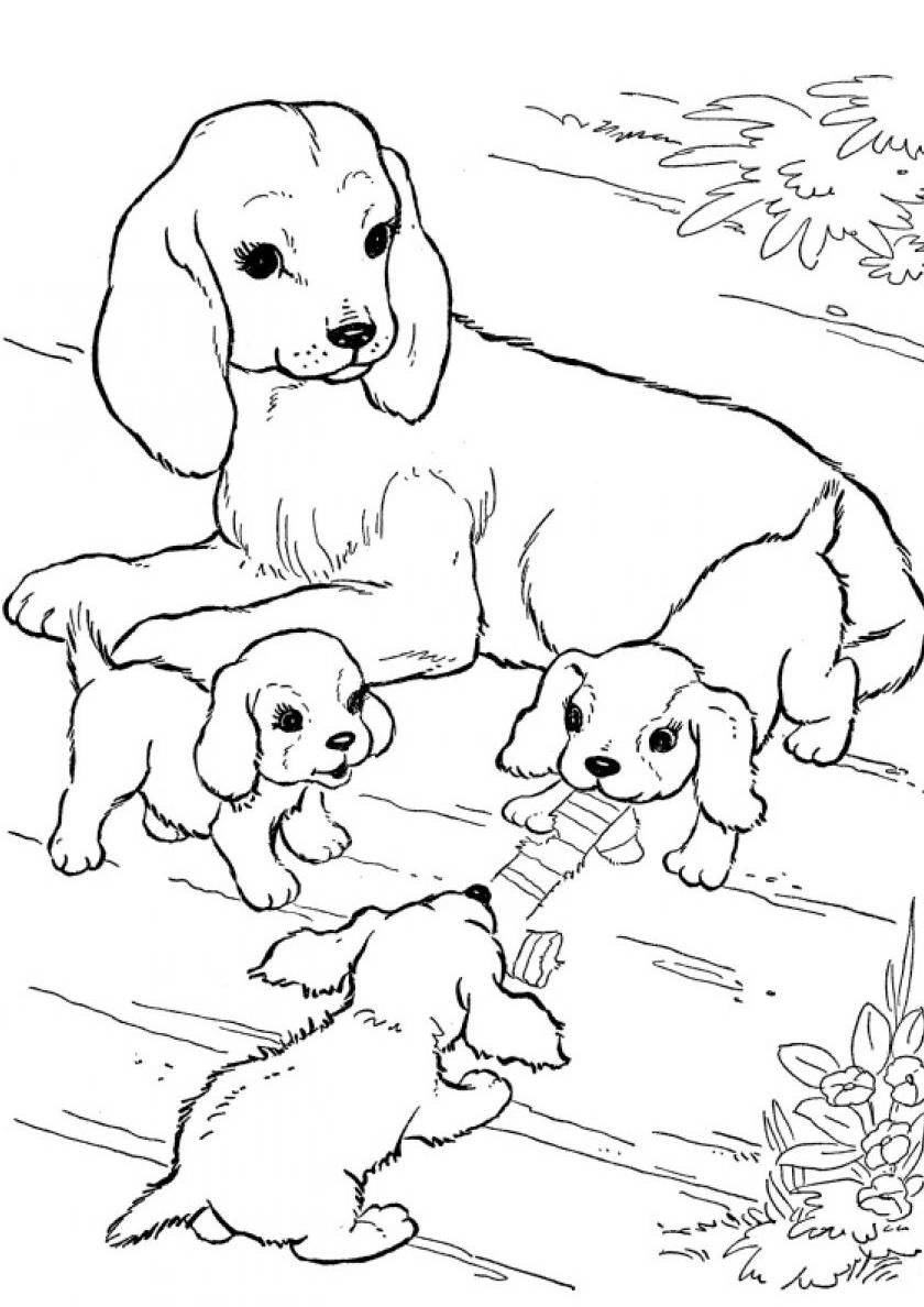 размерах картинки про собак и щенят раскраски кататься льду