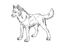 Спокойный волк раскраска распечатать бесплатно на А4 - Волки