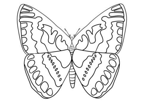Разукрашка Толстоголовка распечатать на А4 - Бабочки