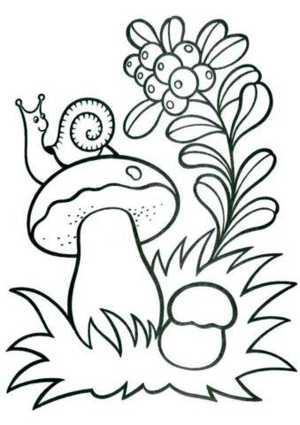 Улитка сидит на грибочке разукрашка скачать и распечатать - Лето