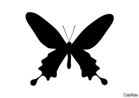 Уссурийский серицин - Трафареты бабочек распечатать трафарет на А4