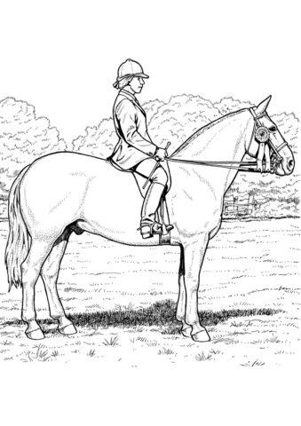 Верховая езда в поле разукрашка скачать и распечатать - Лошади и пони
