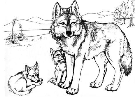 Волчья семья (Волки) бесплатная раскраска на печать