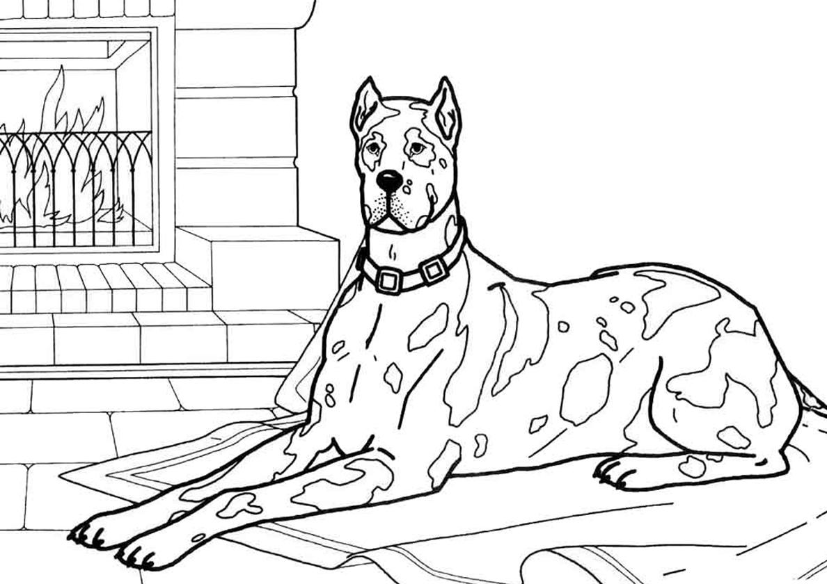 Раскраска Взрослый далматин у камина распечатать | Собаки ...