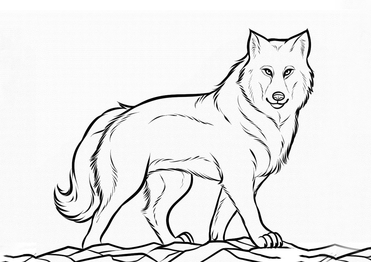 Раскраска Взрослый волк распечатать | Волки
