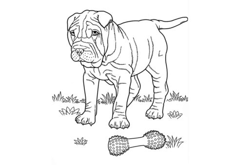 Задумчивый шарпей на прогулке (Собаки и щенки) бесплатная раскраска